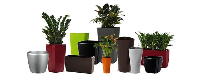 Containers for plants