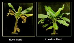 Effect of music on plants
