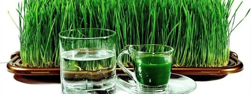 Health benefits of Wheatgrass