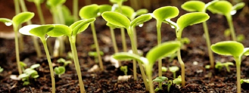Sowing Seeds In The Ground Greenmylife Anyone Can Garden