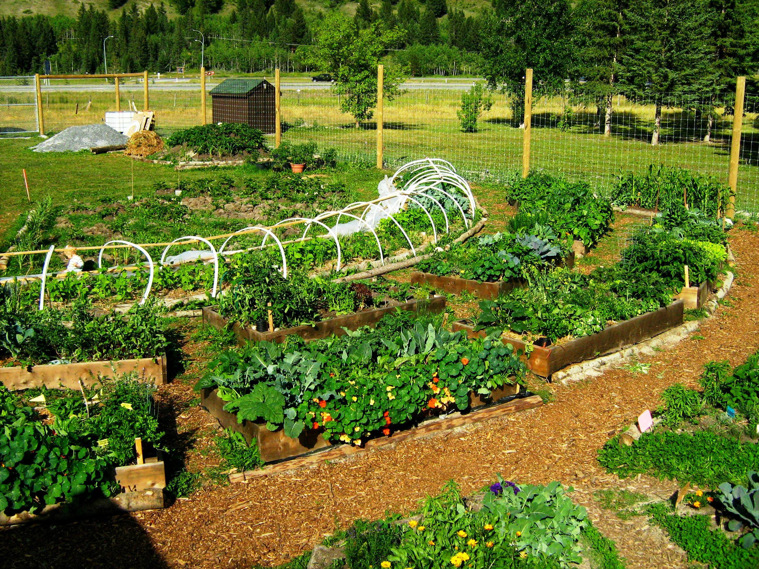 Permaculture garden greenmylife anyone can garden for Garden designs images pictures
