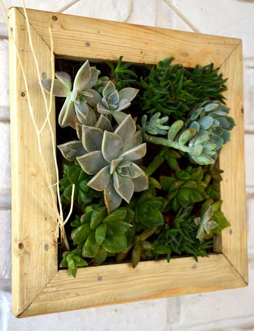Succulent_Hanging_Frame_001 Indoor Plants For Sale In Bangalore on indoor tulips, indoor plants for home, indoor plants for christmas, indoor plants-interior, indoor plants for aquarium, indoor birds, indoor gardening, indoor water plants on sale,