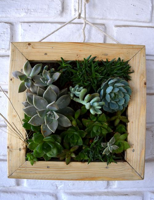 Succulent hanging frame only for bangalore delivery for Gardening tools bangalore