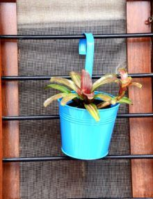Bromeliads,tin pots, tin, blue,office, garden, lawn, balcony, hang, office, watering, window sill, window,