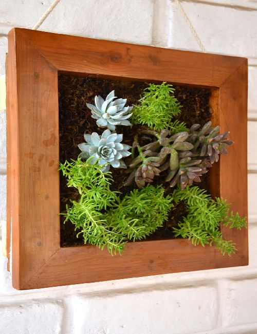 Green frame succulent canvas only for bangalore for Gardening tools bangalore