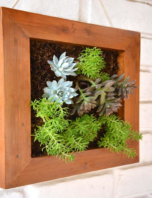 Green Frame Succulent Canvas Only For Bangalore