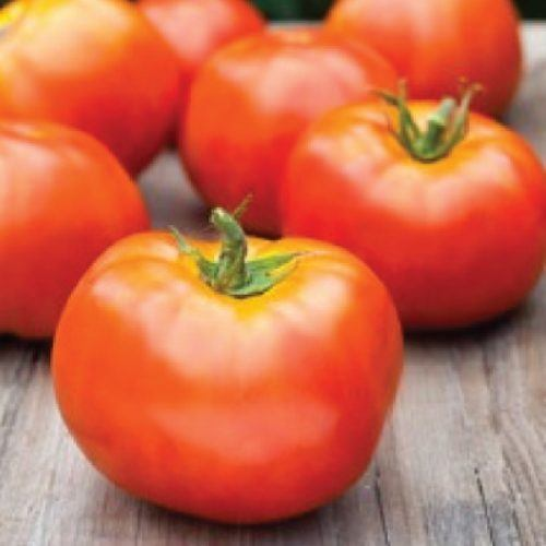 Seeds,plants, heirloom, tomato marion, tomato, marion,