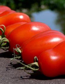 All Tomatoes, Heirlooms, Heirlooms, Indeterminate, Paste Type, Pots & Small Spaces, Tomatoes, Vegetables.