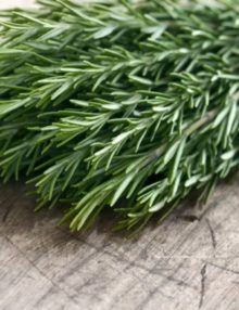 Herb Rosemary, plants, seeds, garden, rosemary,house